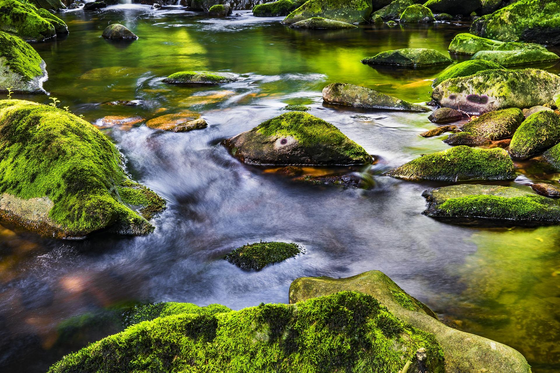 Rivière de la vie